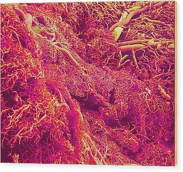 Blood Vessels, Sem Wood Print by Susumu Nishinaga