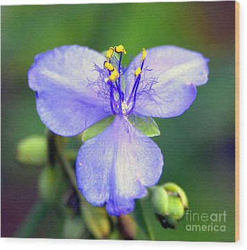 Flowers Of The Forest Series  Wood Print by Terry Troupe