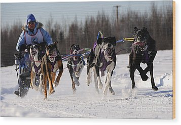 2011 Limited North American Sled Dog Race Wood Print by Gary Whitton