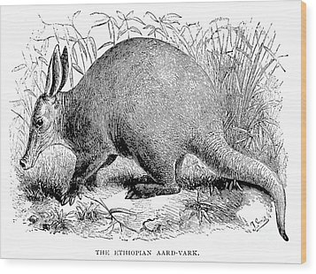 Aardvark Wood Print by Granger