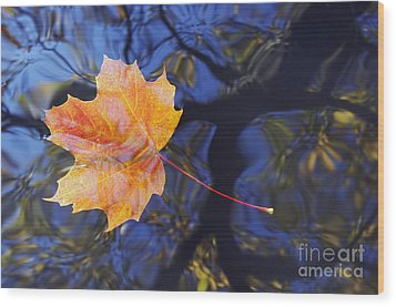 Autumn Leaf On The Water Wood Print by Michal Boubin