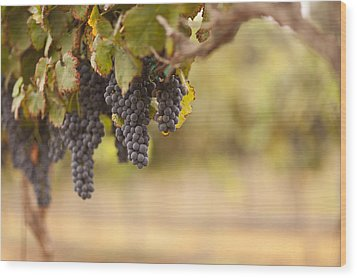 Beautiful Lush Grape Vineyard In The Morning Sun And Mist Wood Print by Andy Dean