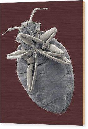 Bedbug, Sem Wood Print by Steve Gschmeissner