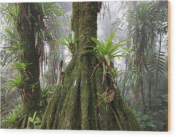Bromeliad Bromeliaceae And Tree Fern Wood Print by Cyril Ruoso