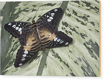 Butterfly Wood Print by Nick Mares