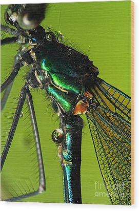 Dragonfly In Drops Wood Print by Odon Czintos