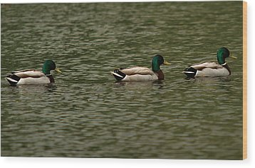 Wood Print featuring the photograph 3 Ducks by Josef Pittner