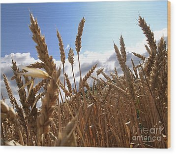 Field Of Wheat Wood Print by Bernard Jaubert