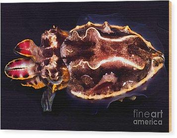 Flamboyant Cuttlefish Wood Print by Dante Fenolio