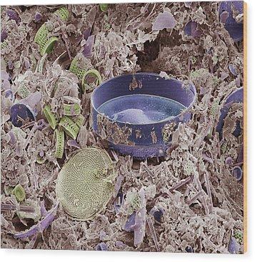 Fossilised Diatoms, Sem Wood Print by Steve Gschmeissner