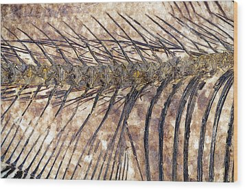 Fossilised Fish Wood Print by Lawrence Lawry