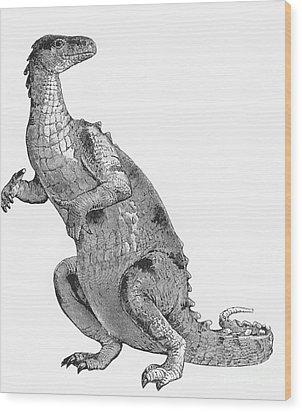 Iguanodon, Mesozoic Dinosaur Wood Print by Science Source