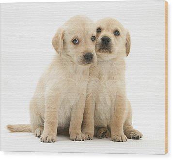 Labrador Retriever Puppies Wood Print by Jane Burton