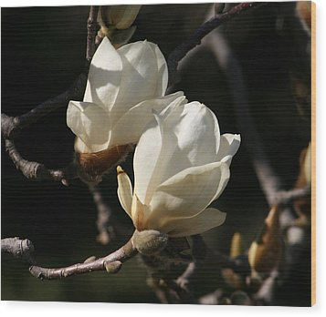Magnolia World Of Beauty Wood Print by Valia Bradshaw