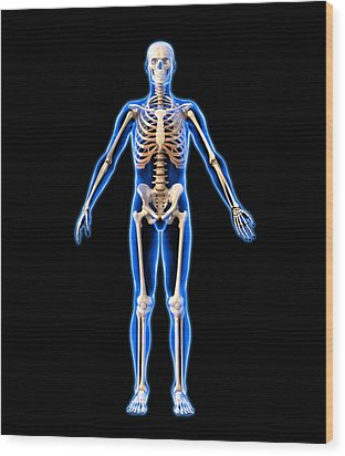Male Skeleton, Artwork Wood Print by Roger Harris