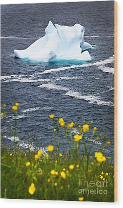 Melting Iceberg Wood Print by Elena Elisseeva