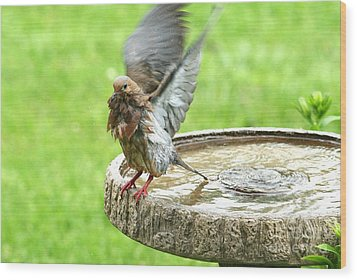 Wood Print featuring the photograph Mourning Dove by Jack R Brock