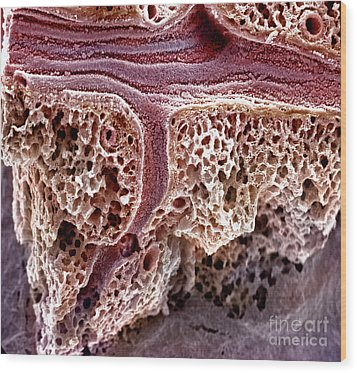 Mouse Lung, Sem Wood Print by Science Source