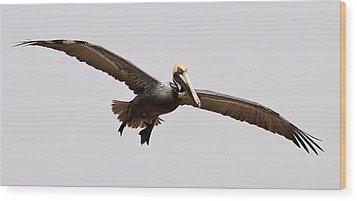 Pelican Wings Wood Print by Paulette Thomas