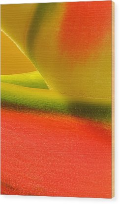 Photograph Of A Lobster Claws Heliconia Wood Print by Perla Copernik