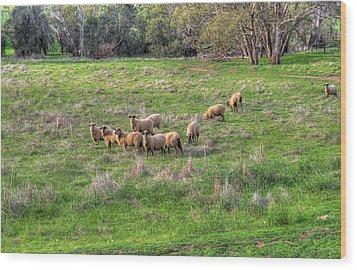 Rural Australia Wood Print by Imagevixen Photography