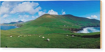 Slea Head, Dingle Peninsula, Co Kerry Wood Print by The Irish Image Collection