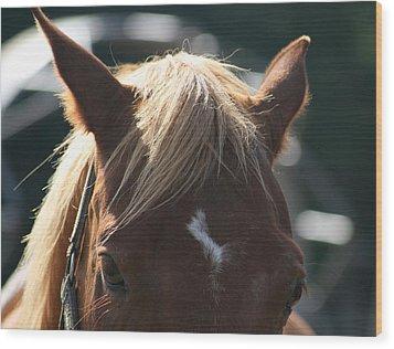 The Beauty Of The Horses Wood Print by Valia Bradshaw