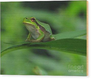 Tree Frog Wood Print by Odon Czintos
