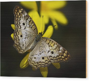 White Peacock Butterfly  Wood Print by Saija  Lehtonen