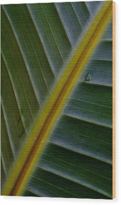 Wood Print featuring the photograph Wild Banana Leaf by Werner Lehmann