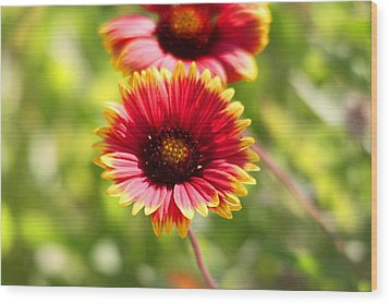 Wood Print featuring the photograph Wild Flower by Jeanne Andrews