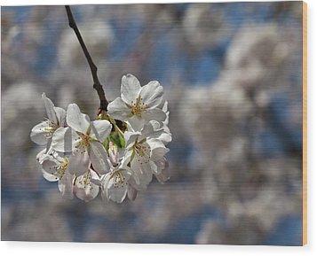 Cherry Blossoms Wood Print by Robert Ullmann