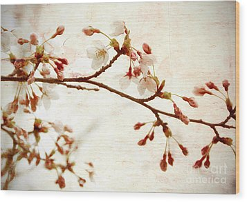 Cherry Blossoms Wood Print by Charline Xia