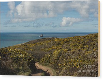 Cornish Seascape St Agnes  Wood Print by Brian Roscorla