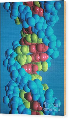 Dna Wood Print by Science Source