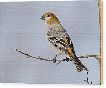 Female Pine Grosbeak Wood Print by Doug Lloyd