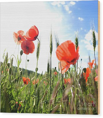 Field Of Poppies. Wood Print by Bernard Jaubert
