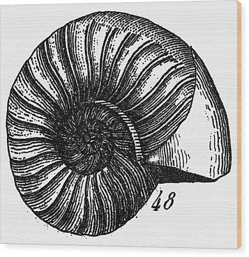 Fossil: Jurassic Period Wood Print by Granger
