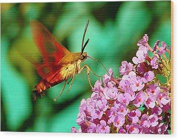 Georgian Moth  Wood Print
