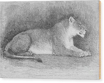 Lion Wood Print by Granger