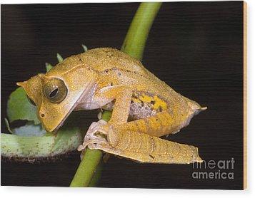 Marsupial Frog Wood Print by Dante Fenolio