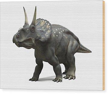 Nedoceratops Dinosaur, Artwork Wood Print by Sciepro