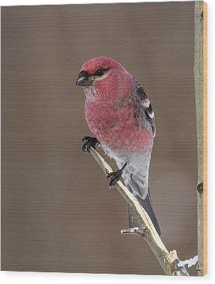 Pine Grosbeak Wood Print by Doug Lloyd