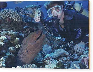 Scuba Diver Wood Print by Alexis Rosenfeld