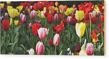 Tulip Garden University Of Pittsburgh  Wood Print by Thomas R Fletcher