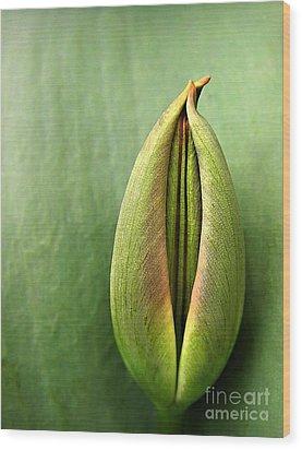 Tulip Wood Print by Odon Czintos