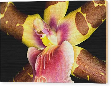 Exotic Orchids Of C Ribet Wood Print by C Ribet