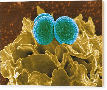 Methicillin-resistant Staphylococcus Wood Print by Science Source