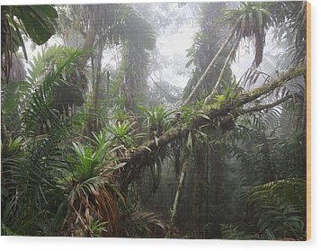 Bromeliad Bromeliaceae And Tree Fern Wood Print by Cyril Ruoso