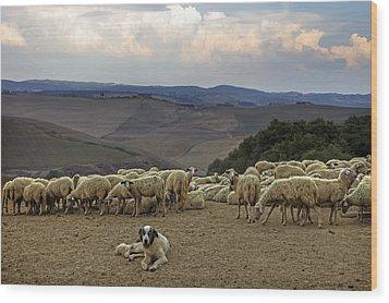Flock Of Sheep Wood Print by Joana Kruse
